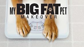 My Big Fat Pet Makeover thumbnail