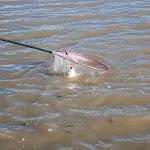 20160710_Fishing_Grushvytsia_012.jpg