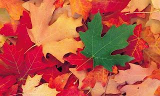 Наблюдения осенью в природе