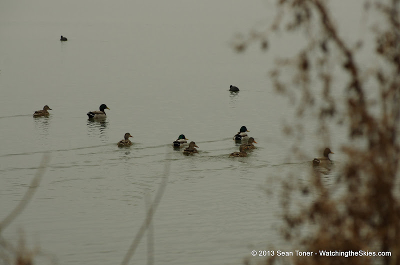 01-26-13 White Rock Lake - IMGP4312.JPG