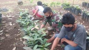 TMMD Kodim Tapsel: Usaha pembibitan Manggis menjadi salah satu alternative warga Desa