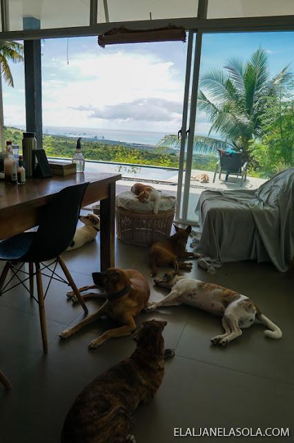 pet sanctuary at Tanyanyas Hill House, San Fernando, Cebu