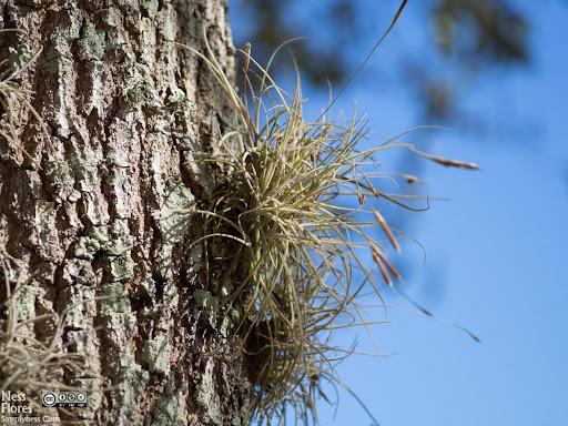 TreeSigma60mmF28-1220052