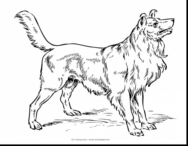 Fantastic Real Dog Coloring Pages With Puppies Coloring Pages And Puppy Coloring  Pages For Adults