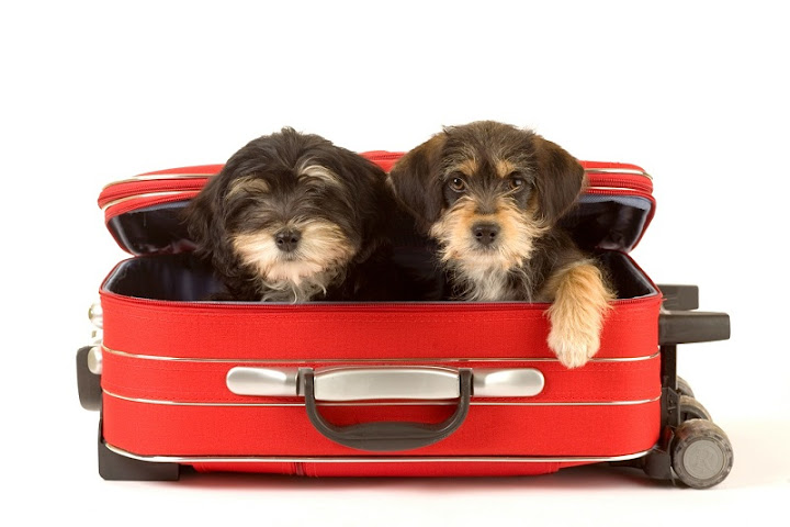 Tips on traveling with pet