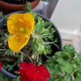 Gardening 2011 - 100_8259.JPG