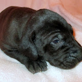 Available black female #3 @ 3 weeks