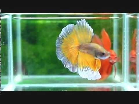 10-gallon-betta-fish-tank-(2)