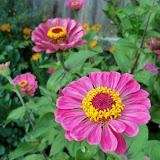 Gardening 2011 - 100_8896.JPG