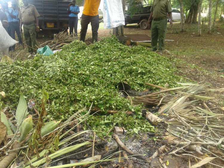 Miraa and Mugokaa worth over sh100, 000 destroyed by police in Matuga on April, 2020.