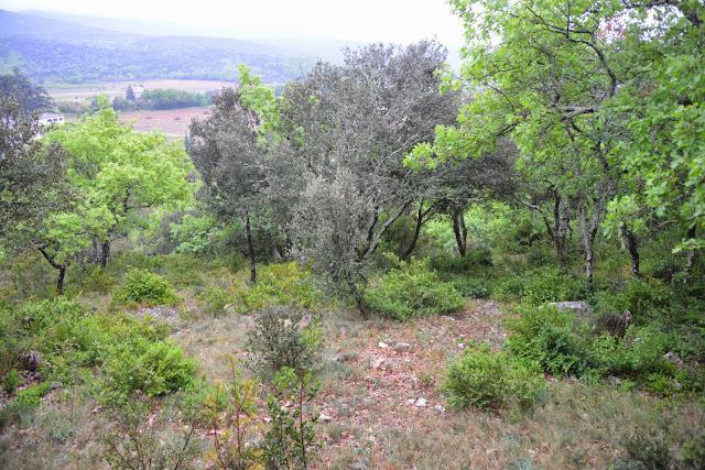 Biotope de Zerynthia rumina. Le Vigier, commune de Lagorce (Ardèche), 19 avril 2014. Photo : L. Voisin