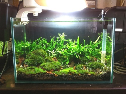 5-gallon-fish-tank-(4)