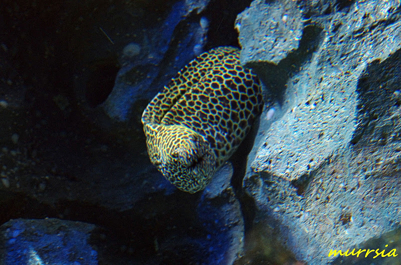 фото рыб океанариум