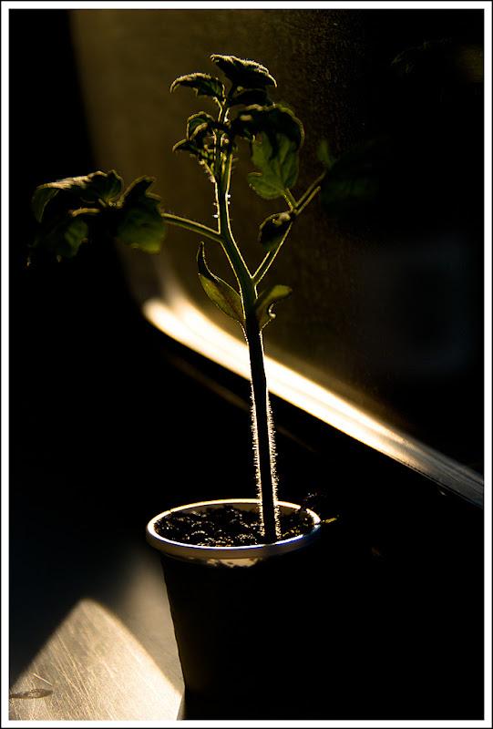 20110917柿子團-By Tamron 18-250旅遊鏡