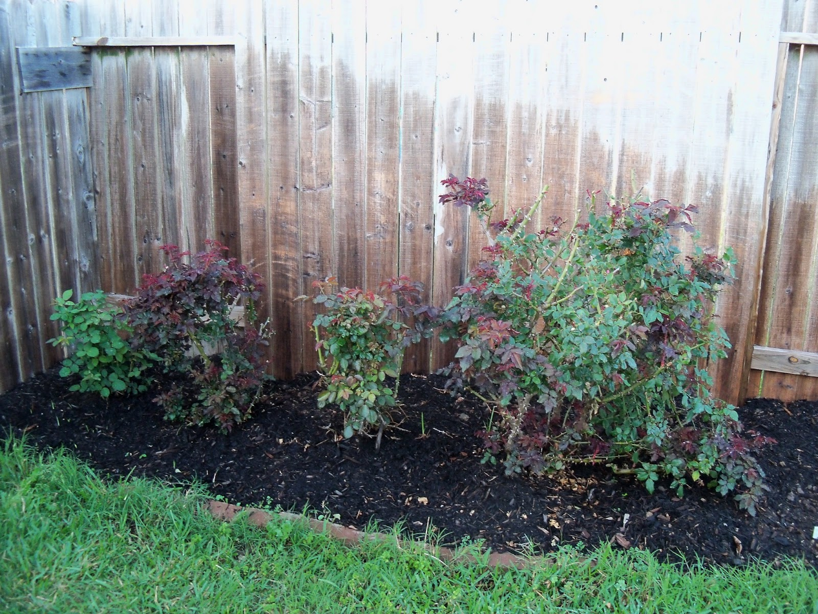 Gardening 2011 - 100_6756.JPG