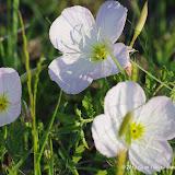 2013 Spring Flora & Fauna - IMGP6396.JPG