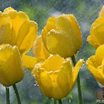 Flower 030_1280px.jpg