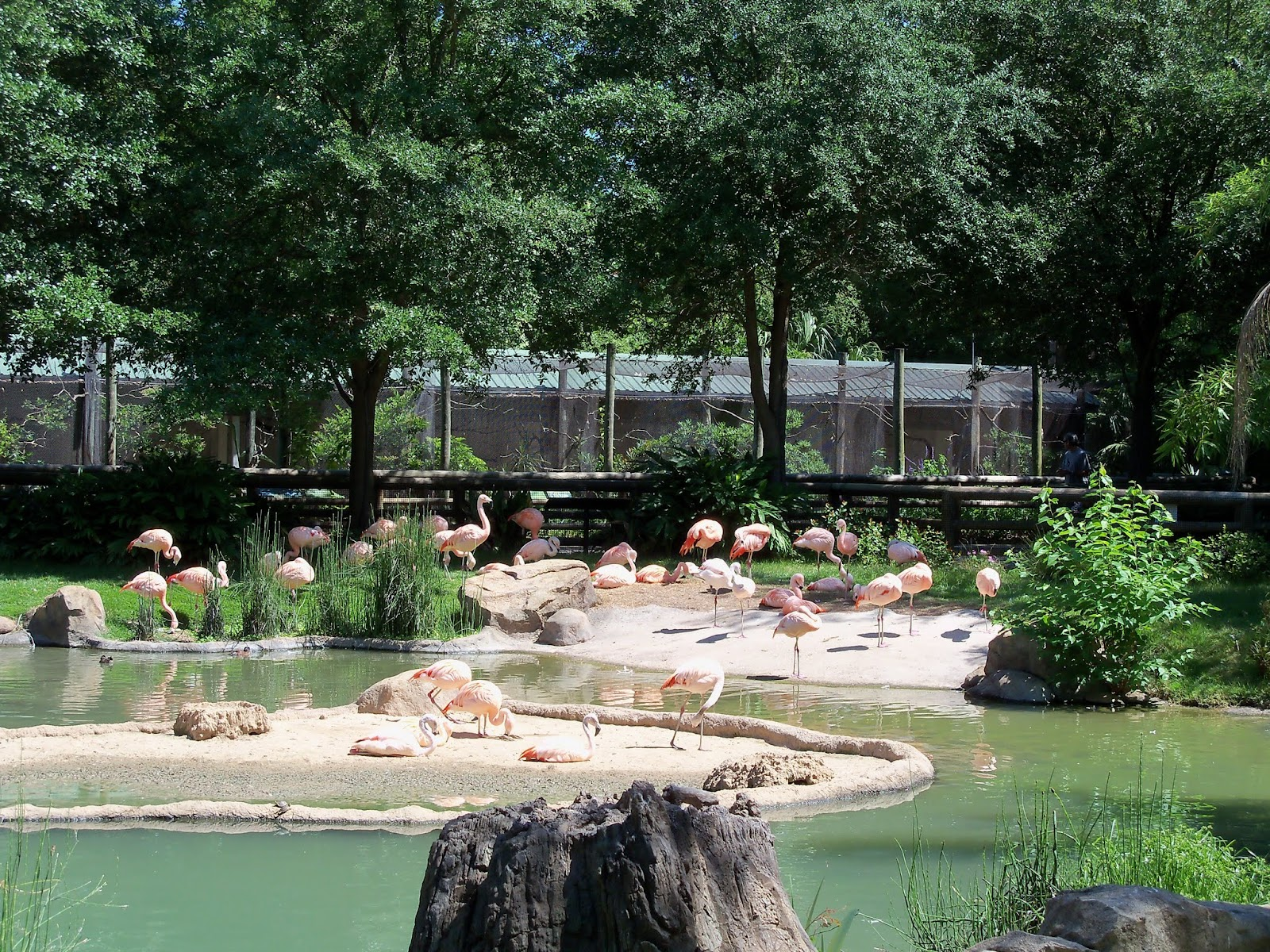 Houston Zoo - 116_8452.JPG