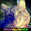 Purple Yellow (The Cat Lover 101)'s profile photo