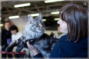 cats-show-25-03-2012-fife-spb-www.coonplanet.ru-029.jpg