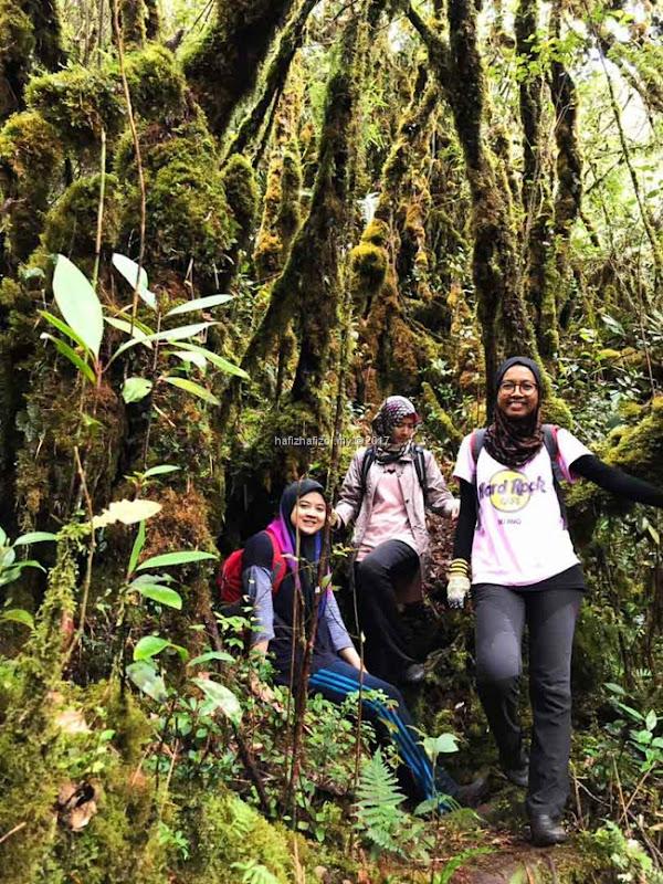 mossy forest cantik di gunung siku