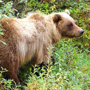 Denali & Central Alaska