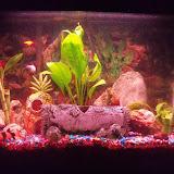 Fish - 100_2943.JPG