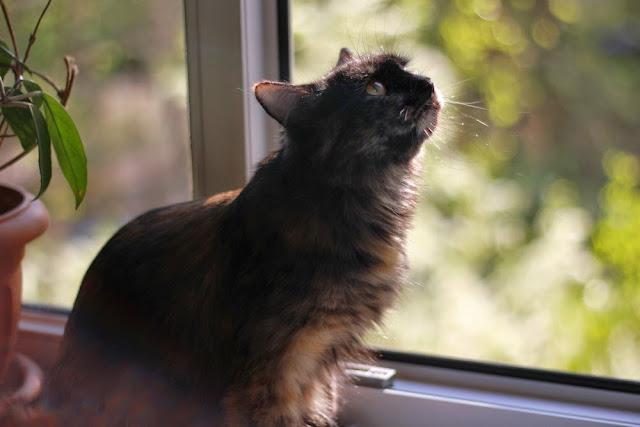 О жизни: Весна, коты прилетели )))