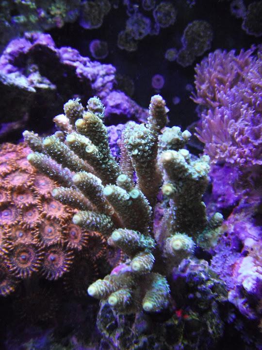 Useful 15 Gallon Cubey Taille Moyenne Noir Aquarium Tout En Un Aquarium Par Jbj In Many Styles Pet Supplies