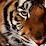 Sarah Khokhar's profile photo