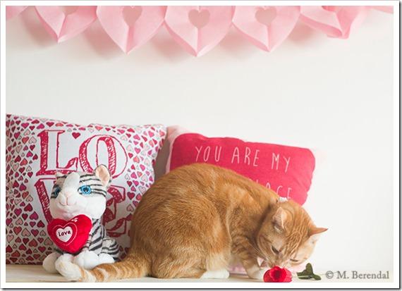 Teddy_Valentine_02