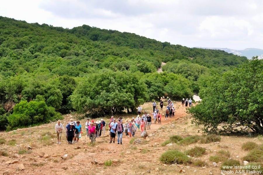 Швиль писга Мирон. Поход по горе Мирон. Экскурсия по Верхней Галилее. Гид в Галилее Светлана Фиалкова.