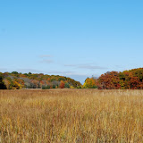 Guilford Salt Meadow Sanctuary Osprey Platform - DSC_0577.jpg