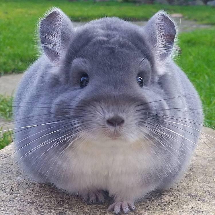 Chú chuột đáng yêu