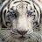 Martin Petkov avatar image