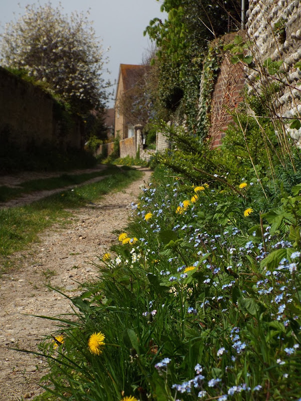 wildflowers along a lane