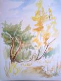 drzewa, akwarela, karton, 24x30cm