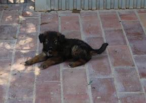 Puppy Mayhem - Quinta Life (puppies)