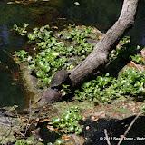 04-04-12 Hillsborough River State Park - IMGP4412.JPG