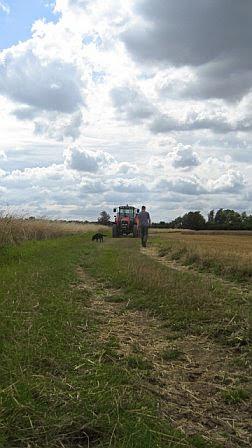Manor Farm Harvest - August 2008 - pic04.jpg