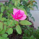 Gardening 2010, Part Three - 101_3997.JPG