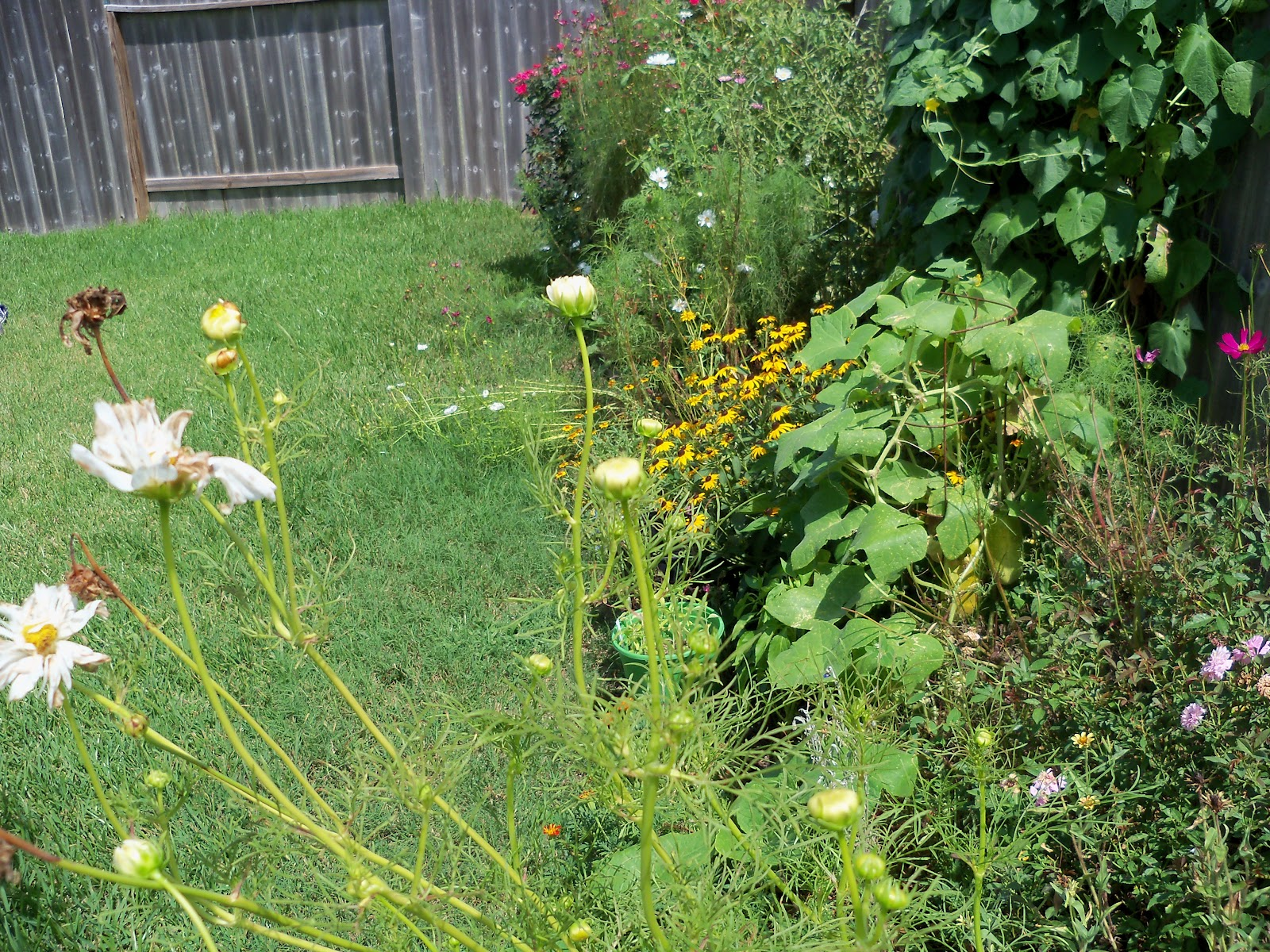 Gardening 2010, Part Three - 101_5103.JPG