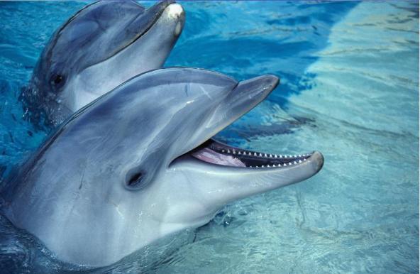 чудеса природы - дельфины