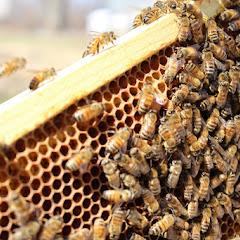 PLC Apiary - Hive%2B3.JPG