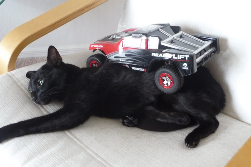 stock (cat not included from Losi)