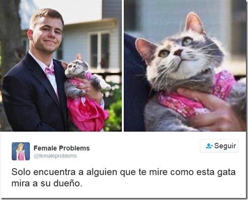 humor twits de gatos (6)