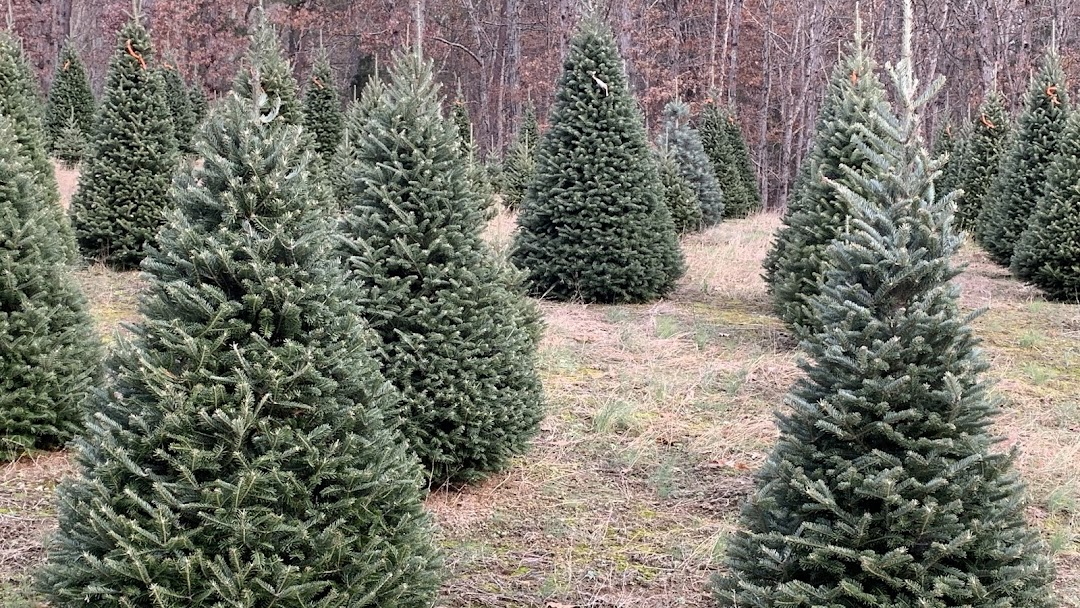 Header image for the site - Whispering Pines Christmas Tree Farm - Store In Milford, Virginia