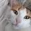 """Ludovic """"Mr U"""" Aury's profile photo"""