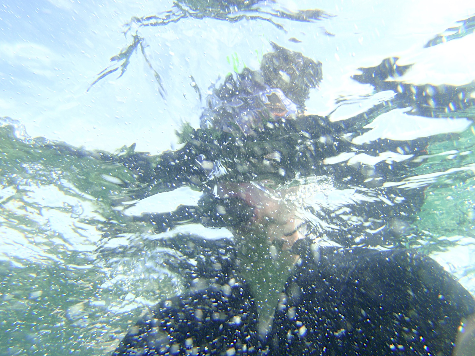 Monogràfic Marí 2010 - P5300341.JPG