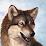 Yarwick Wolf's profile photo